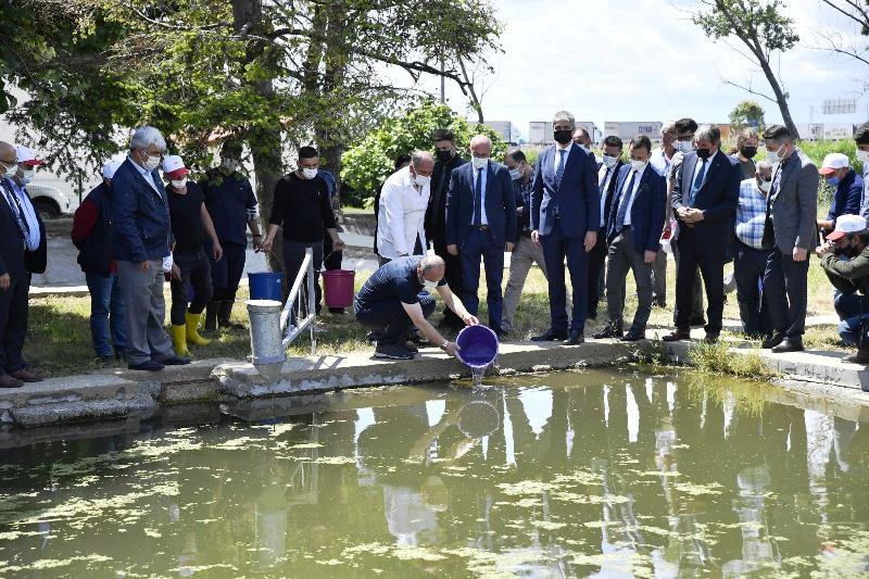 """Vali Canalp, """"İpsala'daki Tesislerde Her Yıl Milyonlarca Balık Üretimi Yapılıyor"""""""